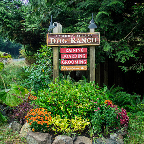 Outdoor wood sign for the Bowen Island Dog Ranch.