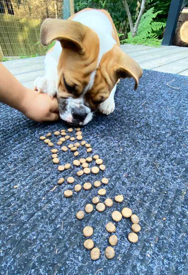 Dog eats treats laid out as the letters of its name.