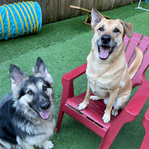 Two happy dogs sitting on a red chair.