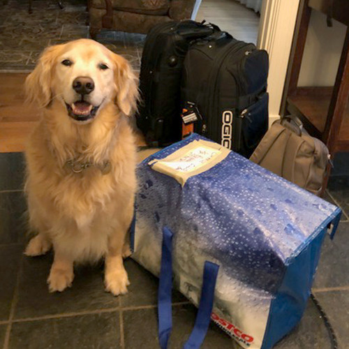 Dog sitting on the floor next to suitcases and overnight bags.
