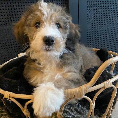 Cute dog sitting in a comfy basket.